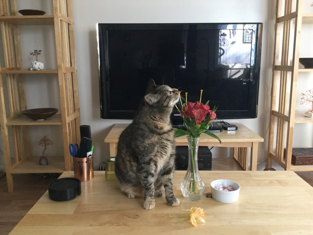 tabby cat sniffing bare lily stems