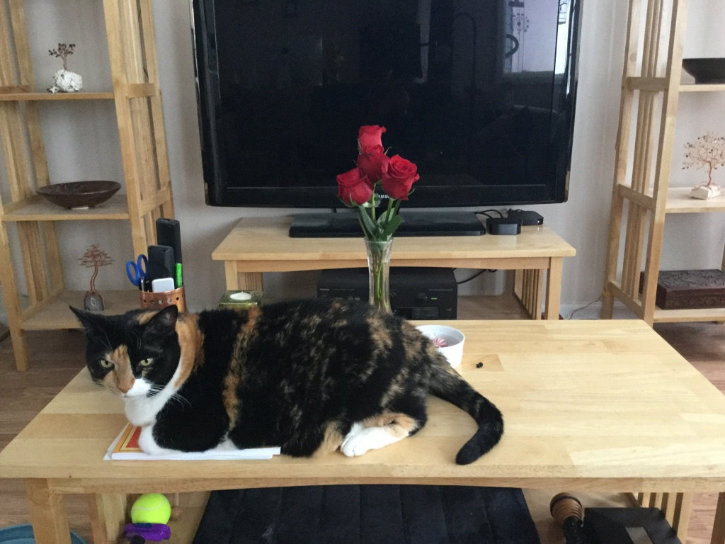 calico cat lying in front of a vase of roses